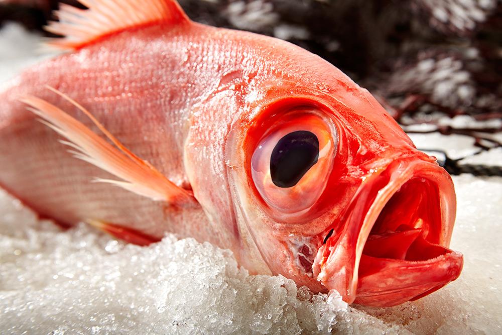 La chucha con cenos mejor pescados y mariscos de for La roca bilbao