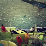 Sardina y chicharrín de Llastres, Playa del Astilleru